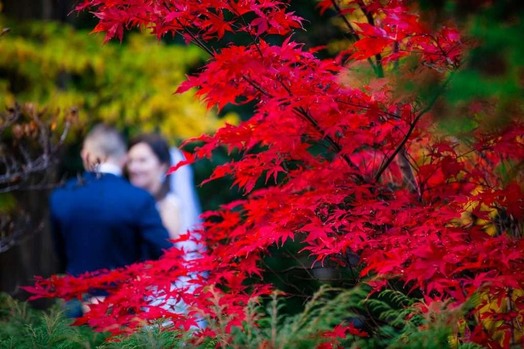 A japán juharoktól vöröslő kert esküvői helyszínnek is tökéletes