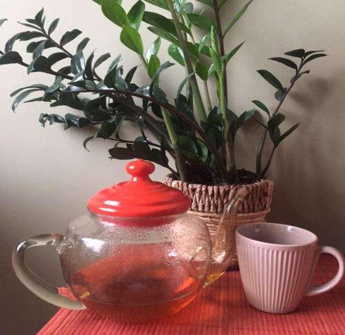 Temple of Heaven zöld tea második lefőzés növény előtt